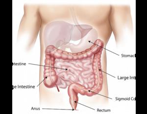 remedii pentru paraziți în corpul uman picături